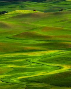 Palouse hills in spring near Moscow Idaho