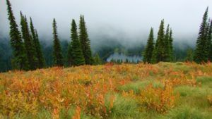Forest meadow with orange flowers and fog