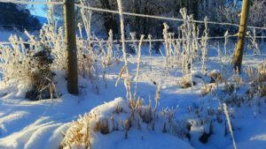 frost on a wire fence